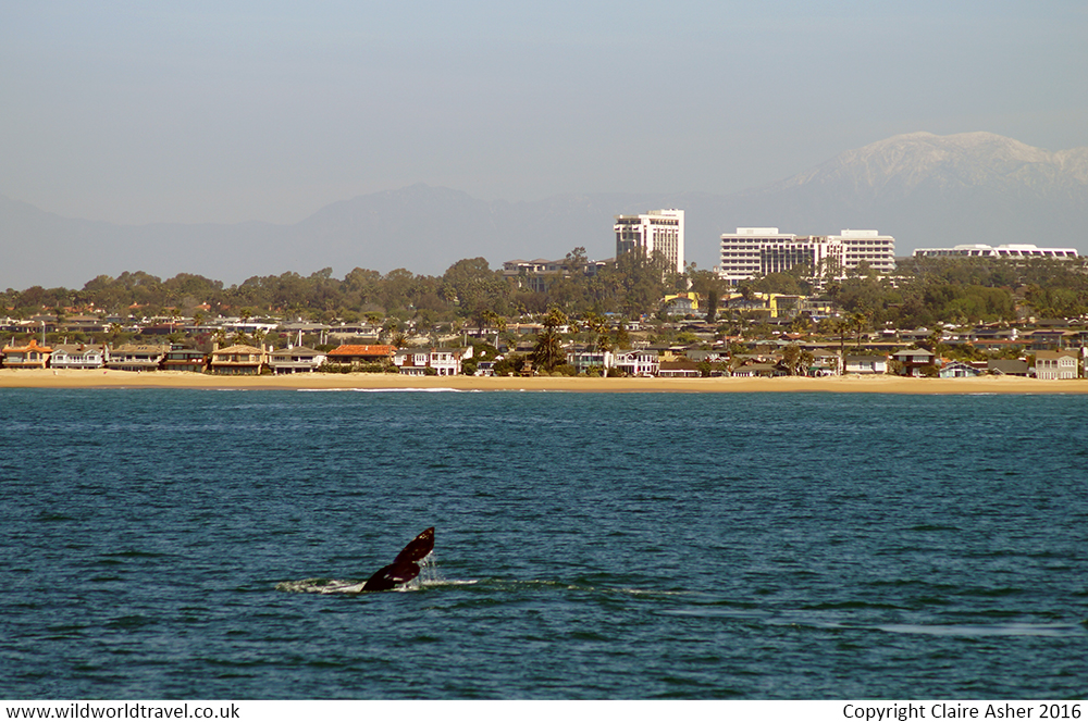 Whale Watching in New Port
